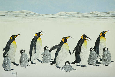 Penguin Drawing - The Learning Curve by Pat Scott