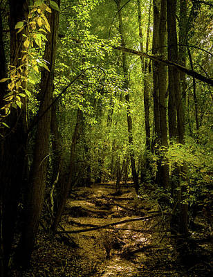 Of Autumn Photograph - The Light In The Forest by TL Mair