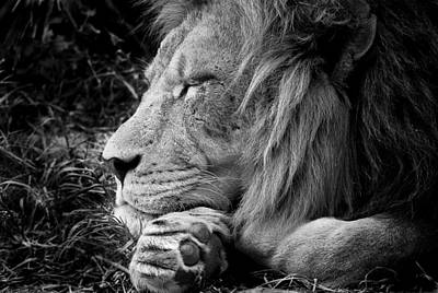 Animals Digital Art - The Lion Sleeps - Black And White by Michelle Wrighton