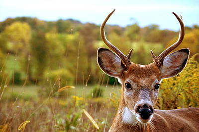 Deer Photograph - The Little One by Emily Stauring