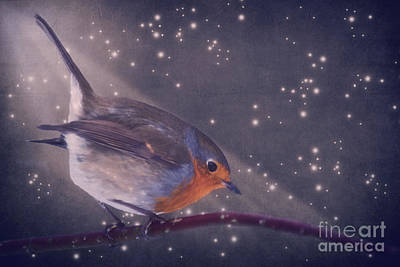 The Little Robin At The Night Print by Angela Doelling AD DESIGN Photo and PhotoArt