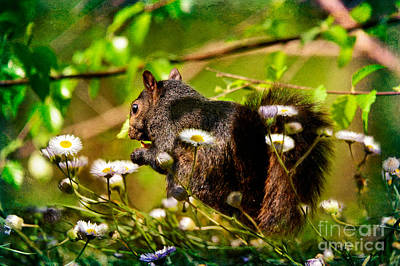 Squirrel Digital Art - The Little Things by Lois Bryan