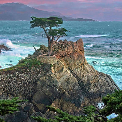 The Lone Cypress Print by Suzanne Stout