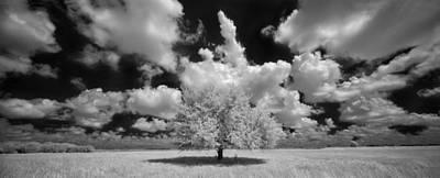 The Lone Tree Print by Susan Pantuso
