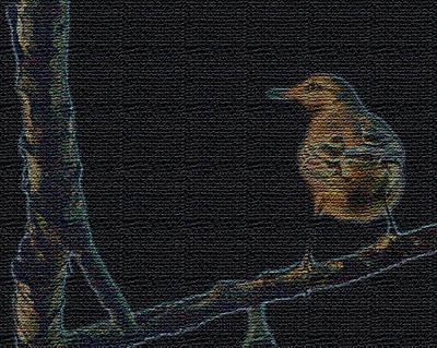 Carolina Wren Digital Art - The Look Out by Betty Carol Parker