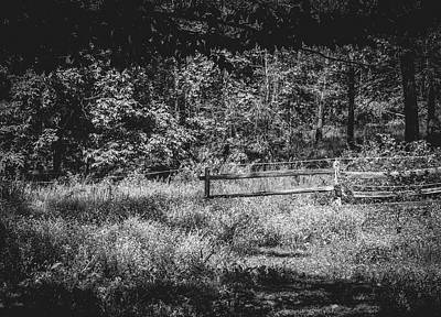 Photograph - The Lower Pasture In Black And White by Mother Nature