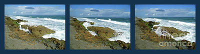 Photograph - The Magic Of Blowing Rocks Preserve by D Hackett