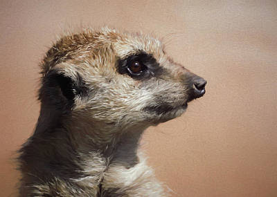 Meerkat Digital Art - The Meerkat Da by Ernie Echols