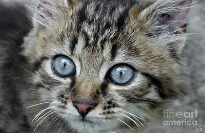 Photograph - The Miracle With Blue Eyes by Sergey Lukashin