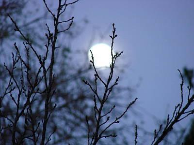 The Moon Print by Liz Vernand