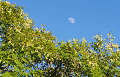 Moonrise Photograph - The Moonrise by Andrea Mazzocchetti