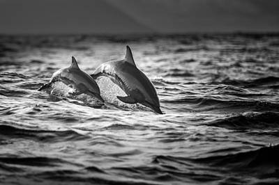 Dolphin Photograph - The Mother And The Baby by Gunarto Song