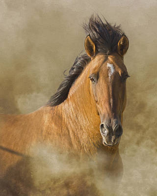 Photograph - The Mustang by Ron  McGinnis