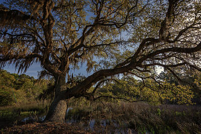 The Oak By The Side Of The Road Print by Rick Berk