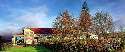 Fall Wine Grapes Photograph - The Oakville Grocery by Jon Neidert
