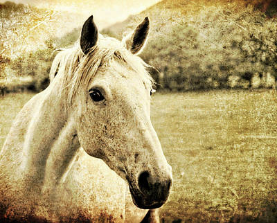 The Old Grey Mare Print by Meirion Matthias