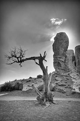 The Old Tree Print by Andreas Freund