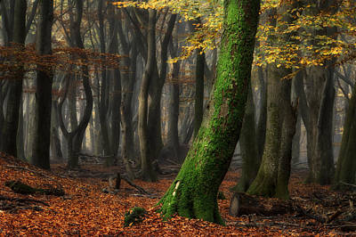 Fall Foliage Photograph - The One by Martin Podt