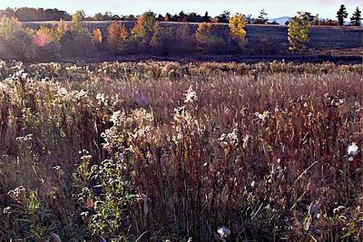 The Overgrown Field In The Late October Afternoon Sun. Original by Joy Nichols