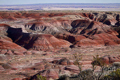 Painted Desert Photograph - The Painted Desert  8062 by James BO  Insogna