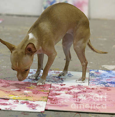 Painter Photograph - The Painting Chihuahua by Antony Galbraith