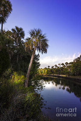 The Palm Stream Print by Marvin Spates