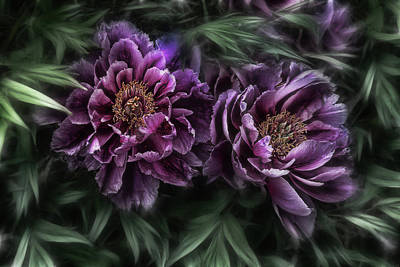 Violet Photograph - The Passion Of Nature by Joachim G Pinkawa
