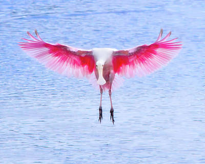 Spoonbill Photograph - The Pink Angel by Mark Andrew Thomas