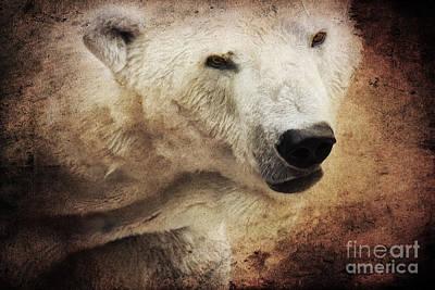 Bear Mixed Media - The Polar Bear by Angela Doelling AD DESIGN Photo and PhotoArt