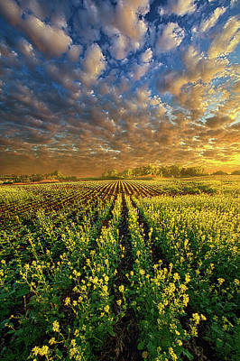 Unity Photograph - The Possibilities Are Many by Phil Koch