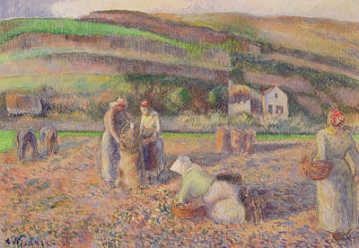 The Potato Harvest Print by Camille Pissarro