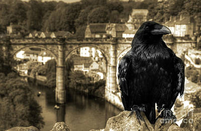 Knaresborough Photograph - The Raven Of Knareborough Castle by Rob Hawkins