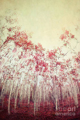 Double Exposure Photograph - The Red Forest by Priska Wettstein
