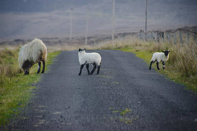 Sheep Digital Art - The Roads In Ireland by Bill Cannon