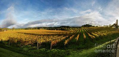 The Rolling Vineyards Of Napa  Print by Jon Neidert