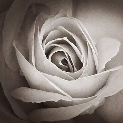The Rose Print by JoAnn Lense