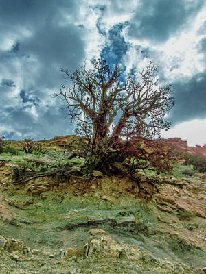 Photograph - The Royal Gorge by Tommy Anderson