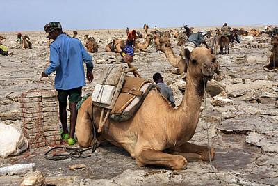 Camel Photograph - The Salt Miners by Aidan Moran