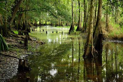 Fisheating Creek Photograph - The Sanctuary by Alan  Seelye-James