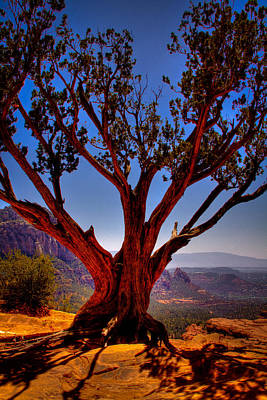 Coconino National Forest Photograph - The Scene In Many John Wayne Westerns by David Patterson