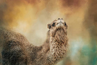Camel Photograph - The Scent Of Fall by Jai Johnson