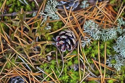 Lichen Photograph - The Scent Of Pine Forest by Veikko Suikkanen