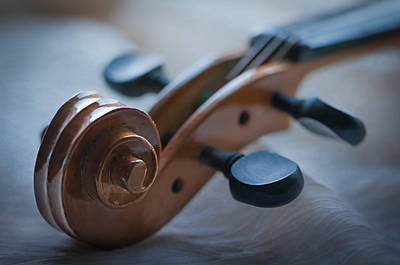 Violin Bows Violin Bows Photograph - The Scroll  by Maggie Terlecki