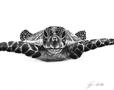 Sea Turtles Drawing - The Sea Traveler by J Ferwerda