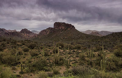 Rainy Day Photograph - The Sentinels Of The Sonoran Desert  by Saija Lehtonen