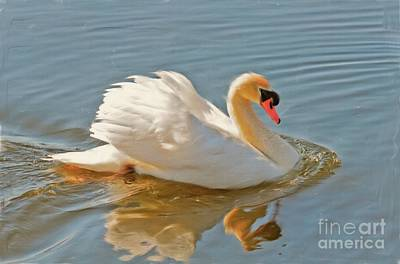 Swan Digital Art - The Show Off by Lois Bryan