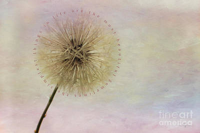 Dandelion Digital Art - The Simplest Things by Mechala  Matthews