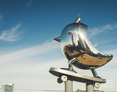 Photograph - The Skater Bird by Sonja Quintero