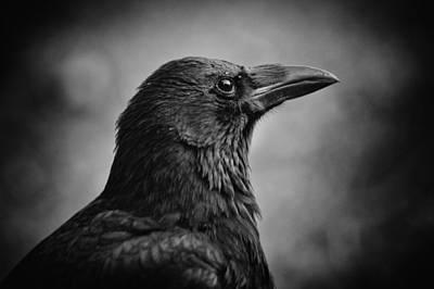 Crow Photograph - Expectation by Owen Calvert