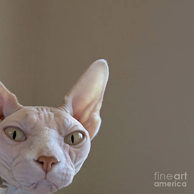 Citrine Painting - The Sphynx by Glennis Siverson